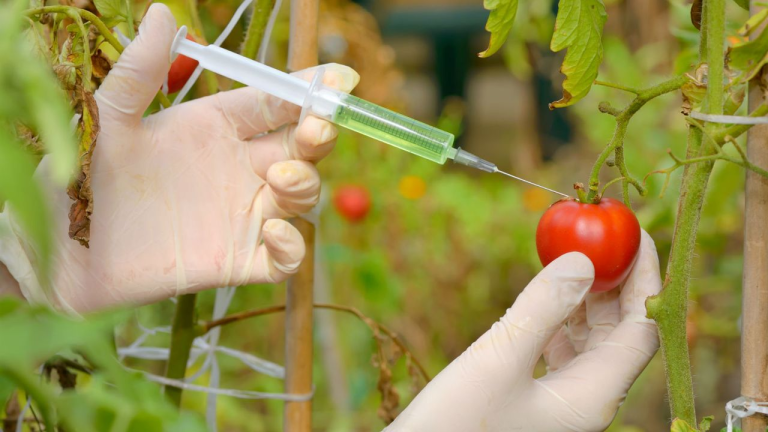 Formation médicale impact des OGM sur la santé en DPC